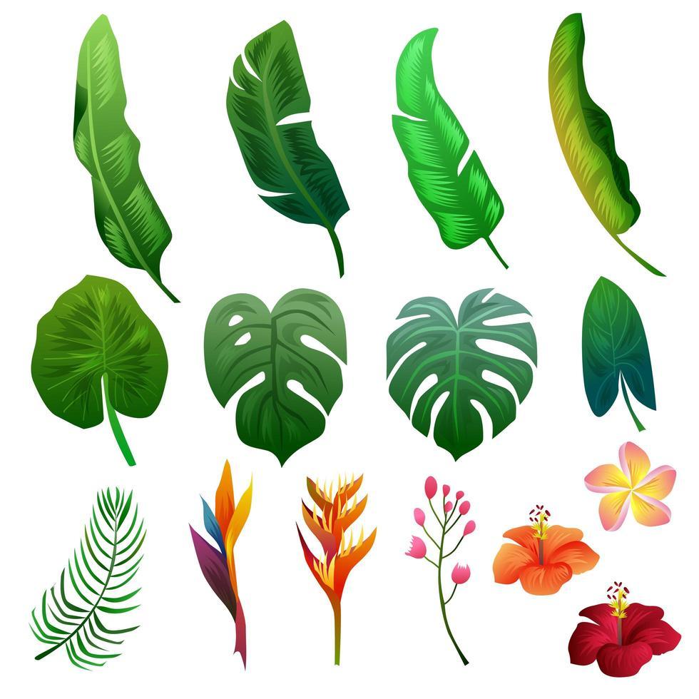 tropiska sommar bladverk natur Clipart objektuppsättning vektor