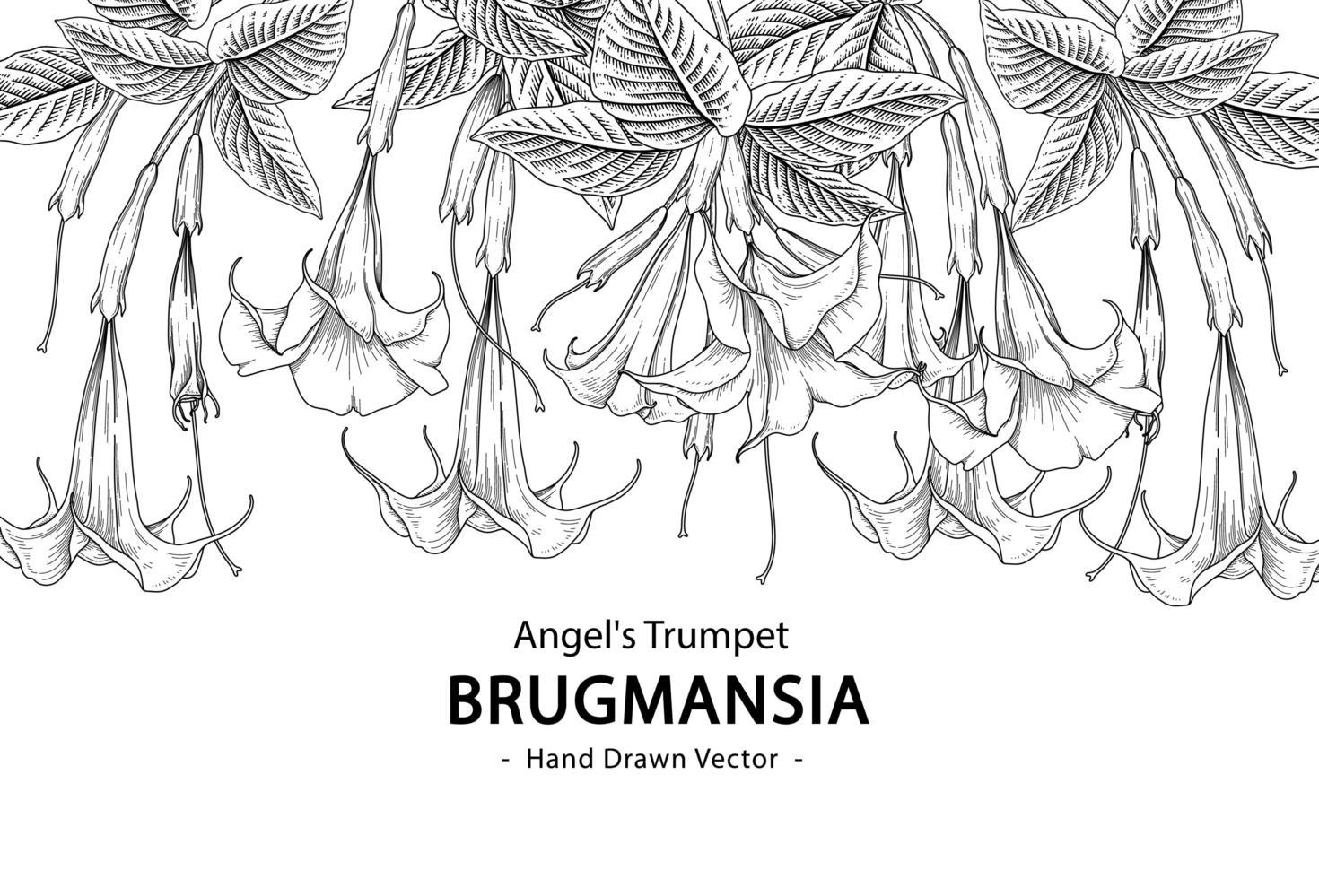 Engelstrompetenblume oder Brugmansia lokalisiert auf weißem Hintergrund vektor