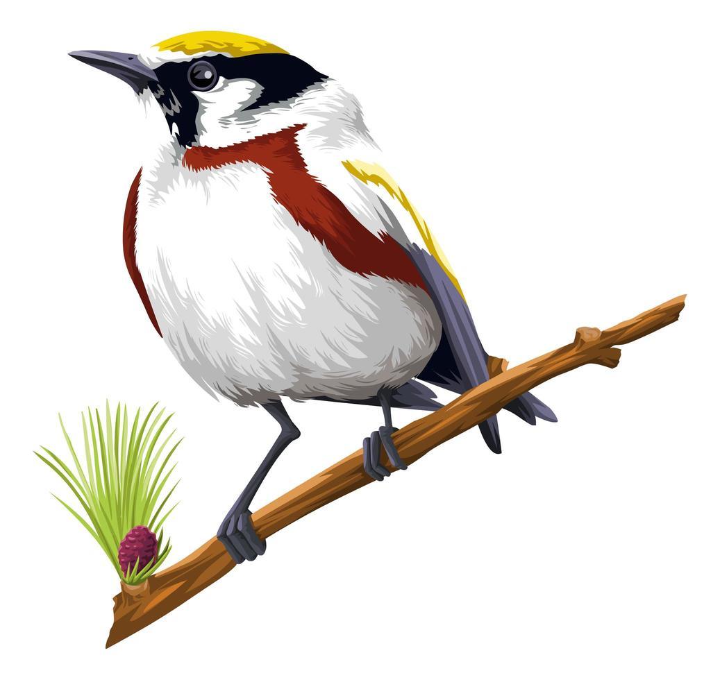 detaljerad fågel som sätter sig på gren vektor