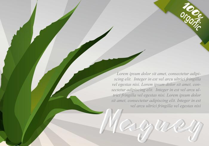 Sunburst Maguey Bakgrund vektor