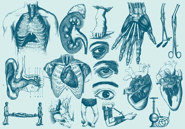 Blaue Anatomie und Gesundheitspflege Illustrationen vektor