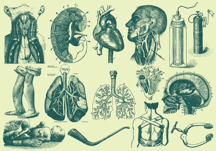 Grön Anatomi Och Sjukvård Illustrationer vektor