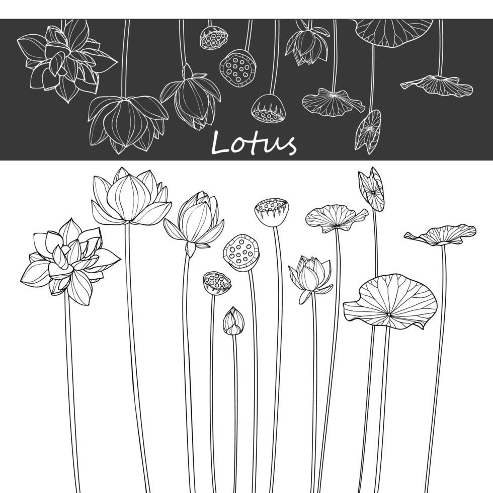 Lotusblumenzeichnungen Design vektor