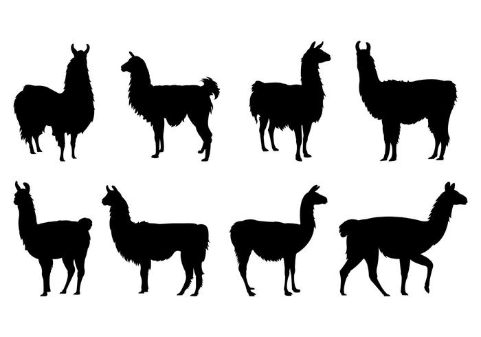 Set von Lama Silhouetten vektor