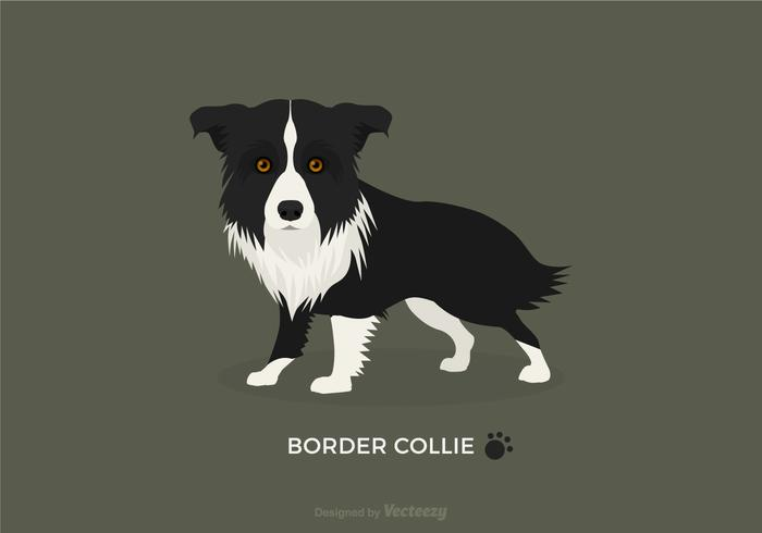 Free vector border collie