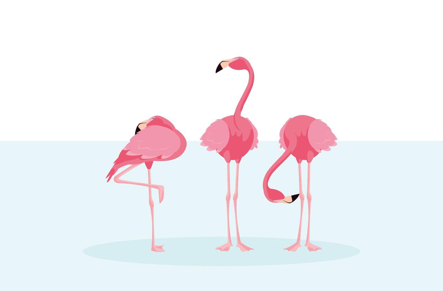schöne Flamingoherde, die im Wasser steht vektor