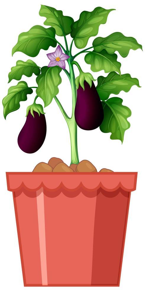 Auberginen Topfpflanze Design vektor