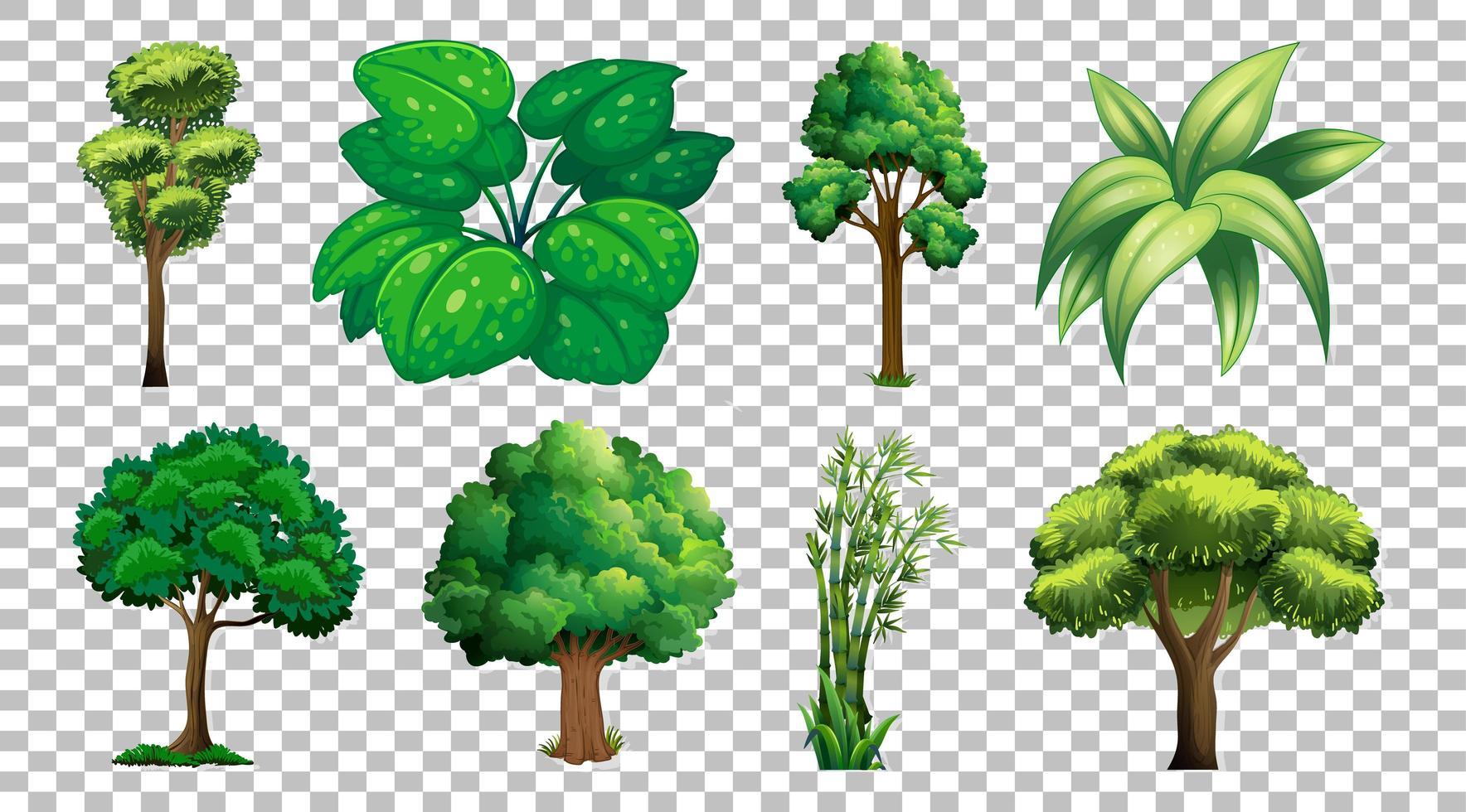 Satz von Bäumen und Pflanzen vektor