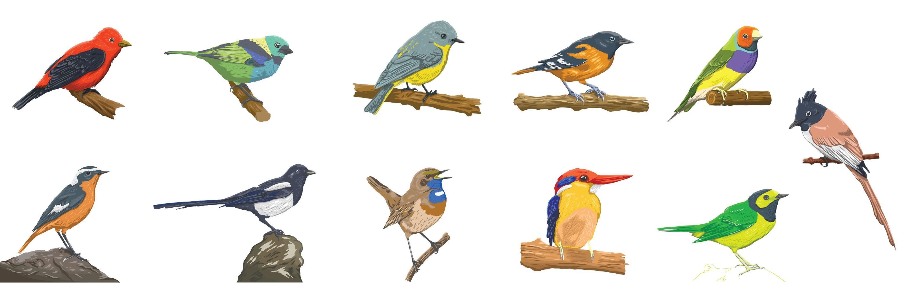 buntes realistisches Vogelset vektor
