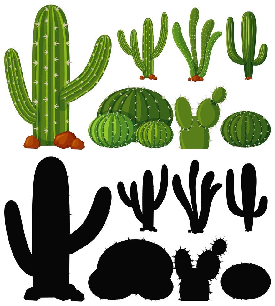 Satz Kaktuspflanze vektor