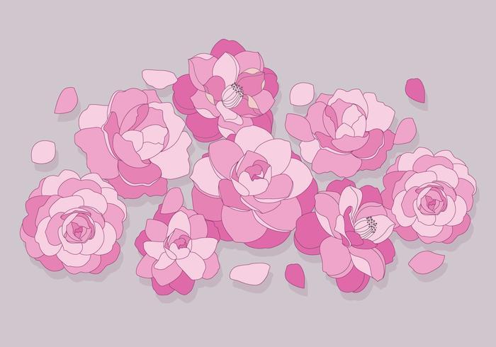 Camellia Blumen Vektor