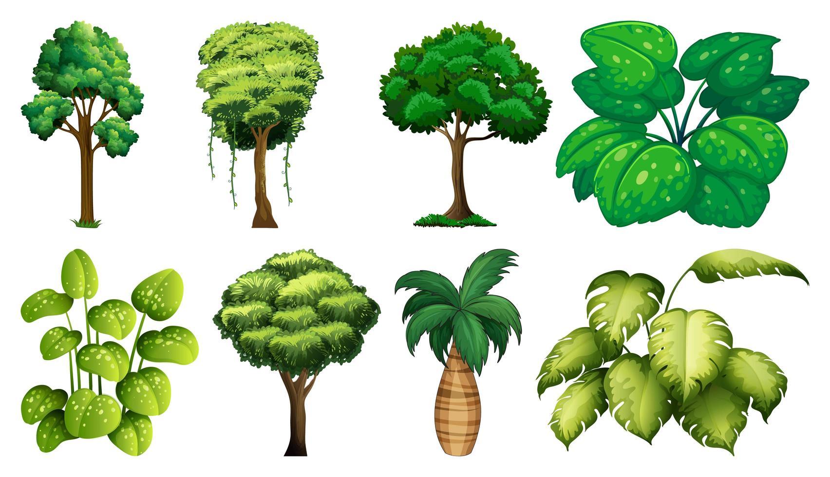 Satz von Pflanzen und Bäumen vektor