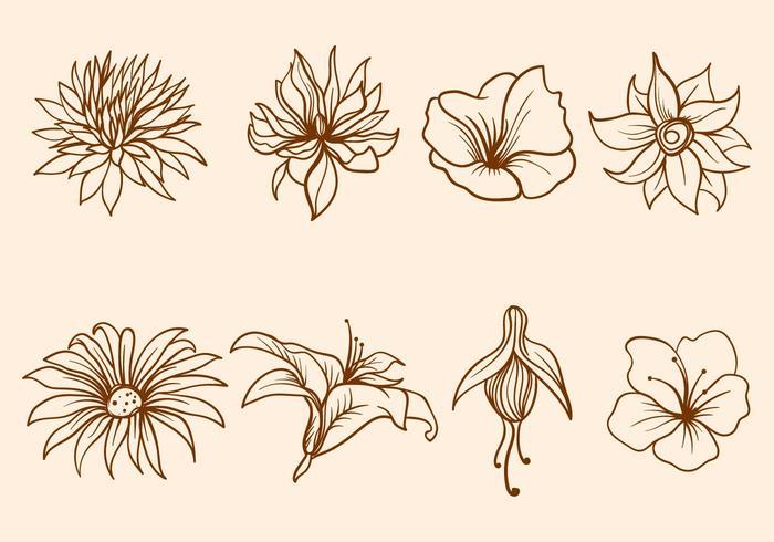 Freie Hand gezeichnete Blume Vektor
