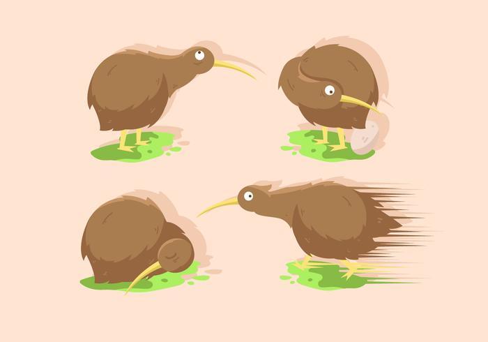 Kiwi fågel vektor illustration uppsättningar