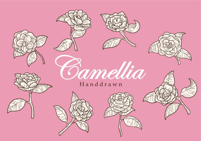 Freie Hand Drawn-Kamelie-Blumen-Vektoren vektor
