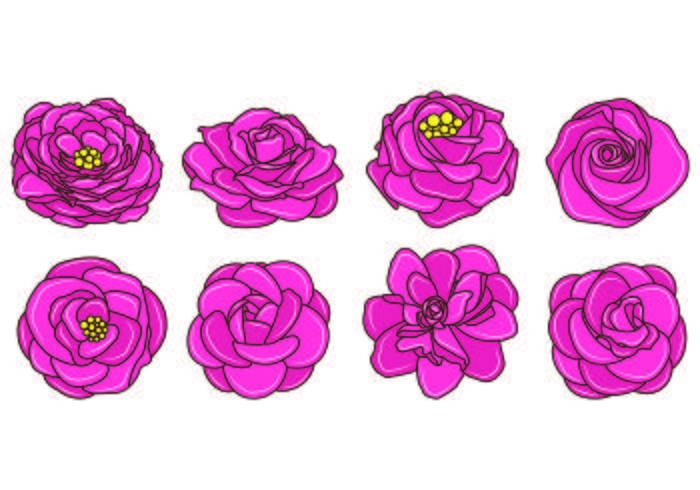 Set Camellia Vektoren