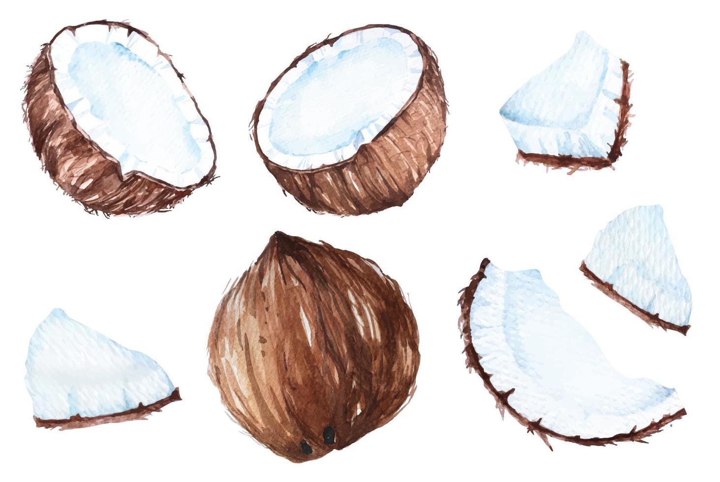 kokosnöt akvarell set vektor