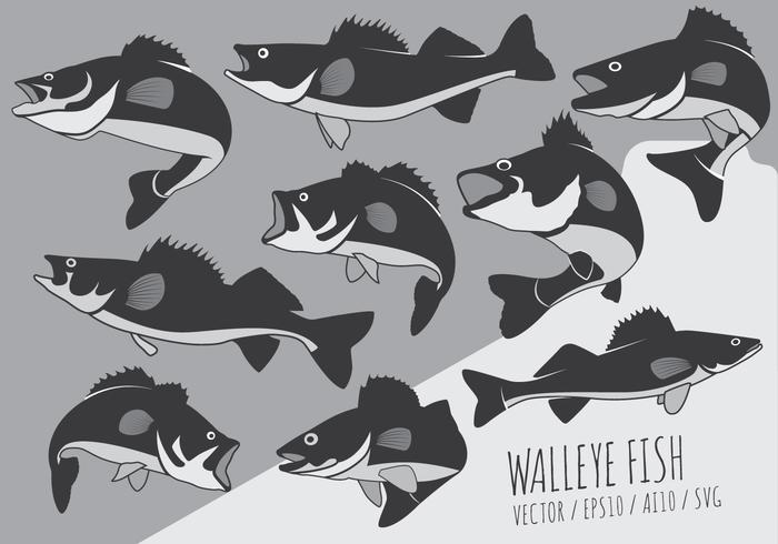 Fisk Perch and Walleye Vektorer
