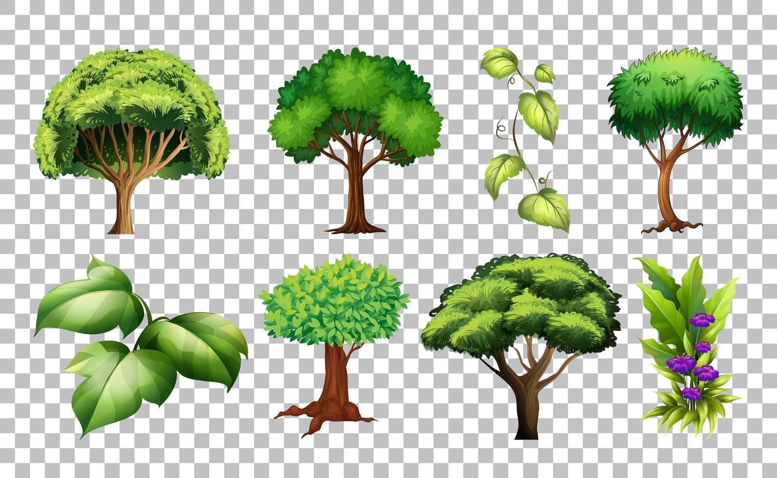 Satz Baum auf transparentem Hintergrund vektor