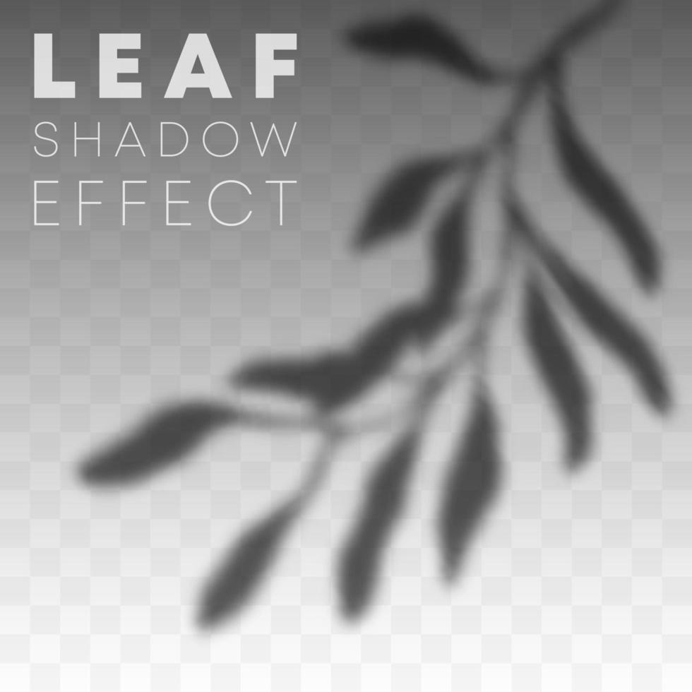 Blattschatten-Overlay-Effekt vektor