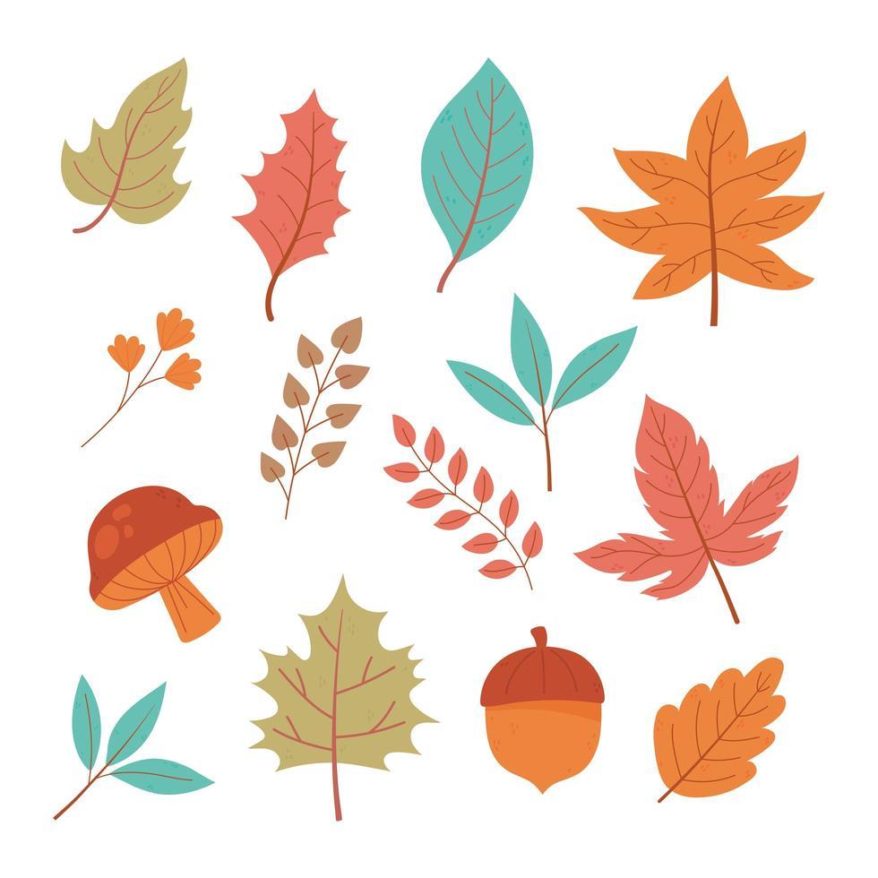 Eichel, Pilz, Blätter und Laub. Herbstikonen vektor
