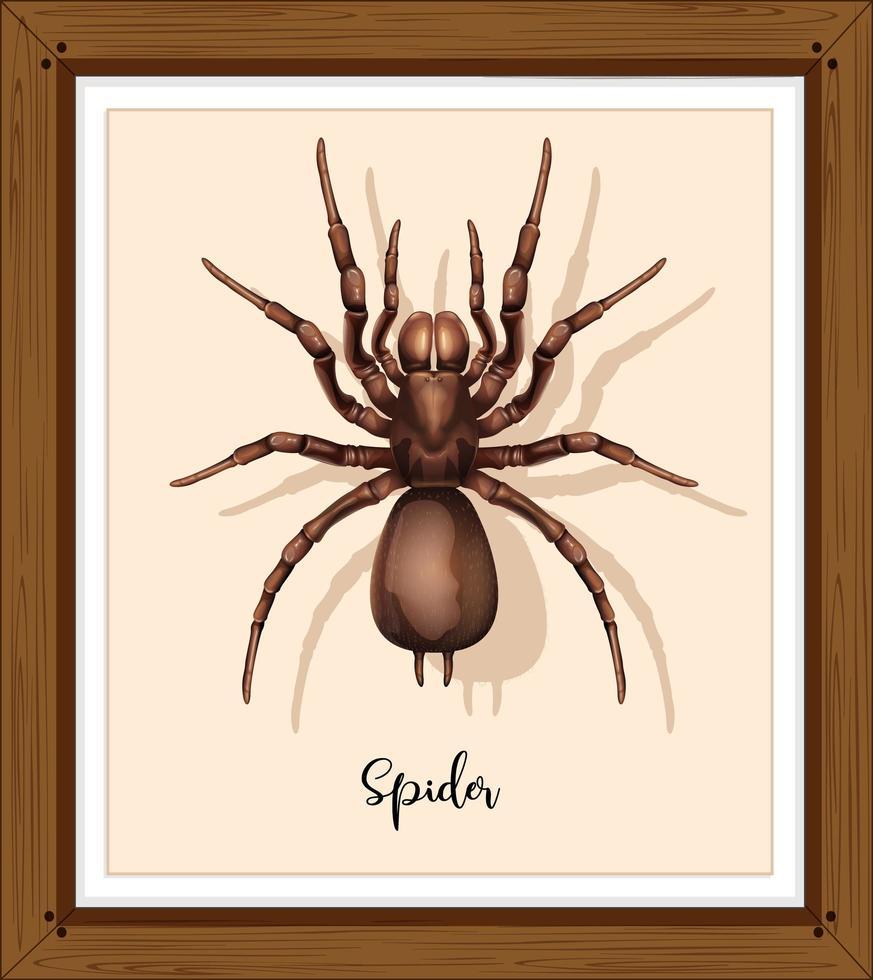spindel på wwoden ram vektor