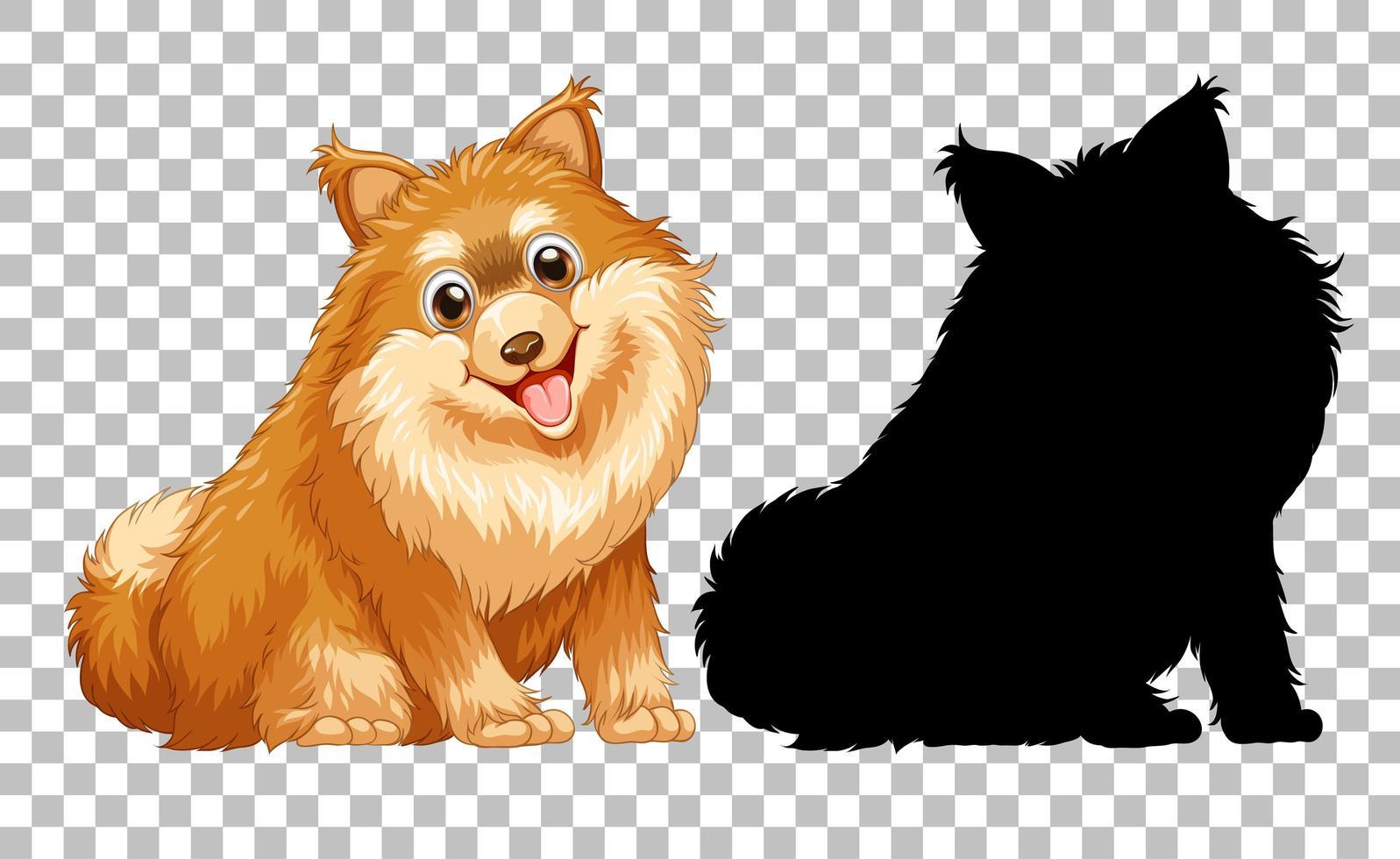 niedlicher pommerscher Hund und seine Silhouette auf transparentem Hintergrund vektor