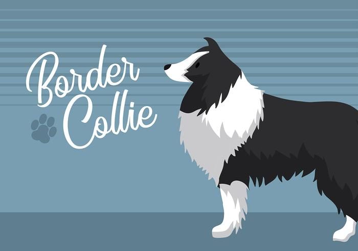 Border-Collie-Free Vector