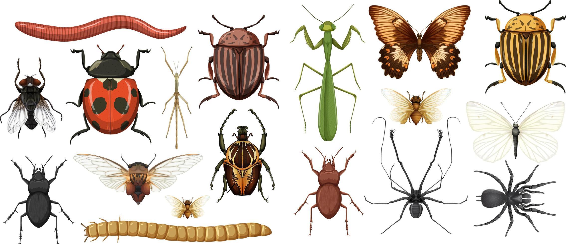 Sammlung verschiedener Insekten isoliert vektor