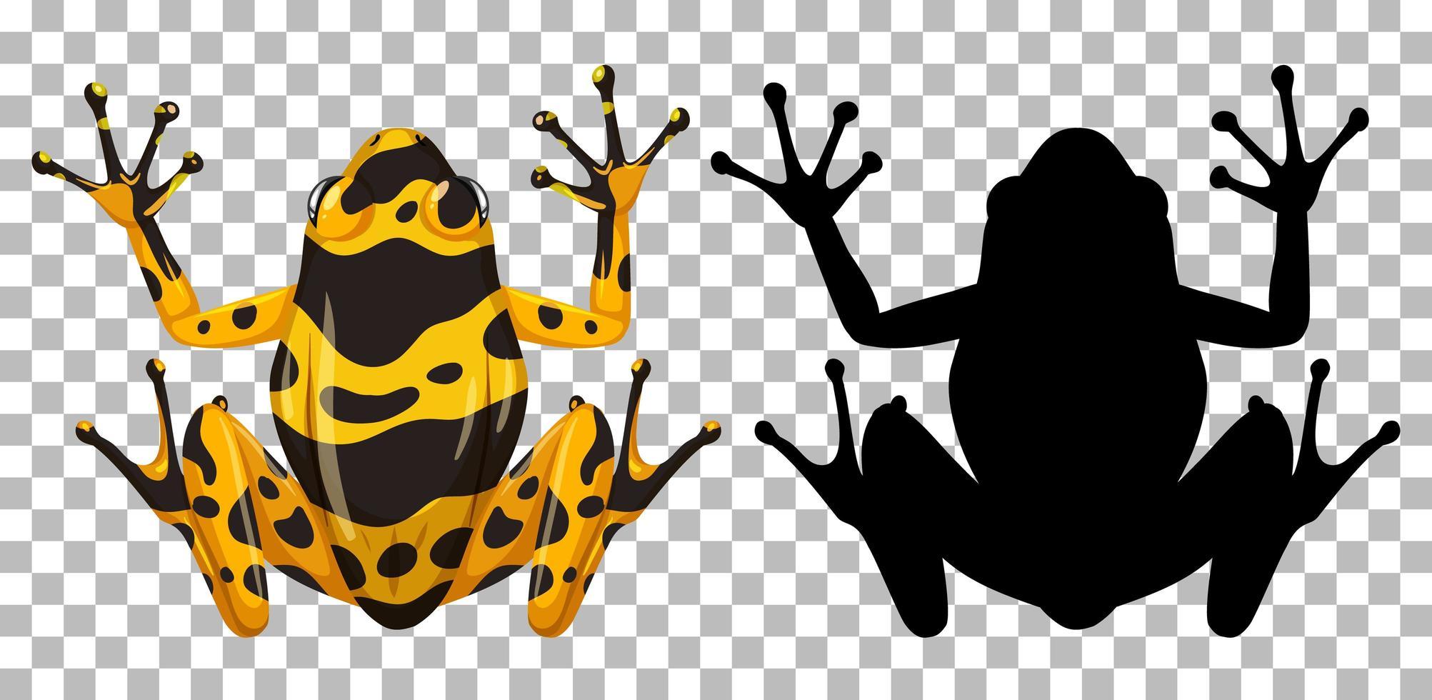 gelb gebänderter Frosch mit seiner Silhouette vektor