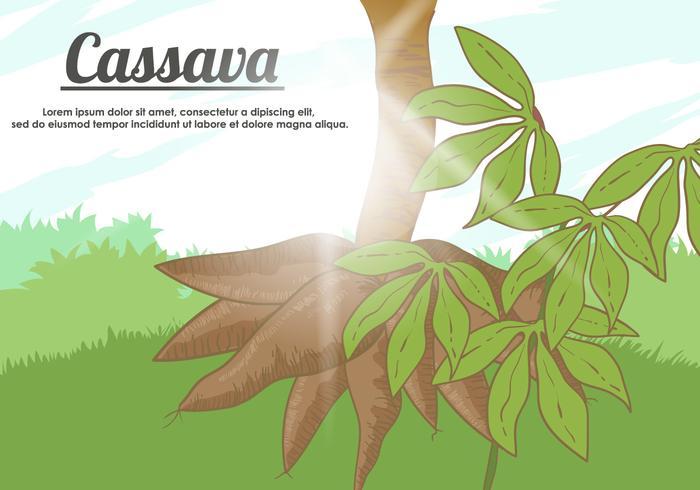 Vector Cassava Wurzel