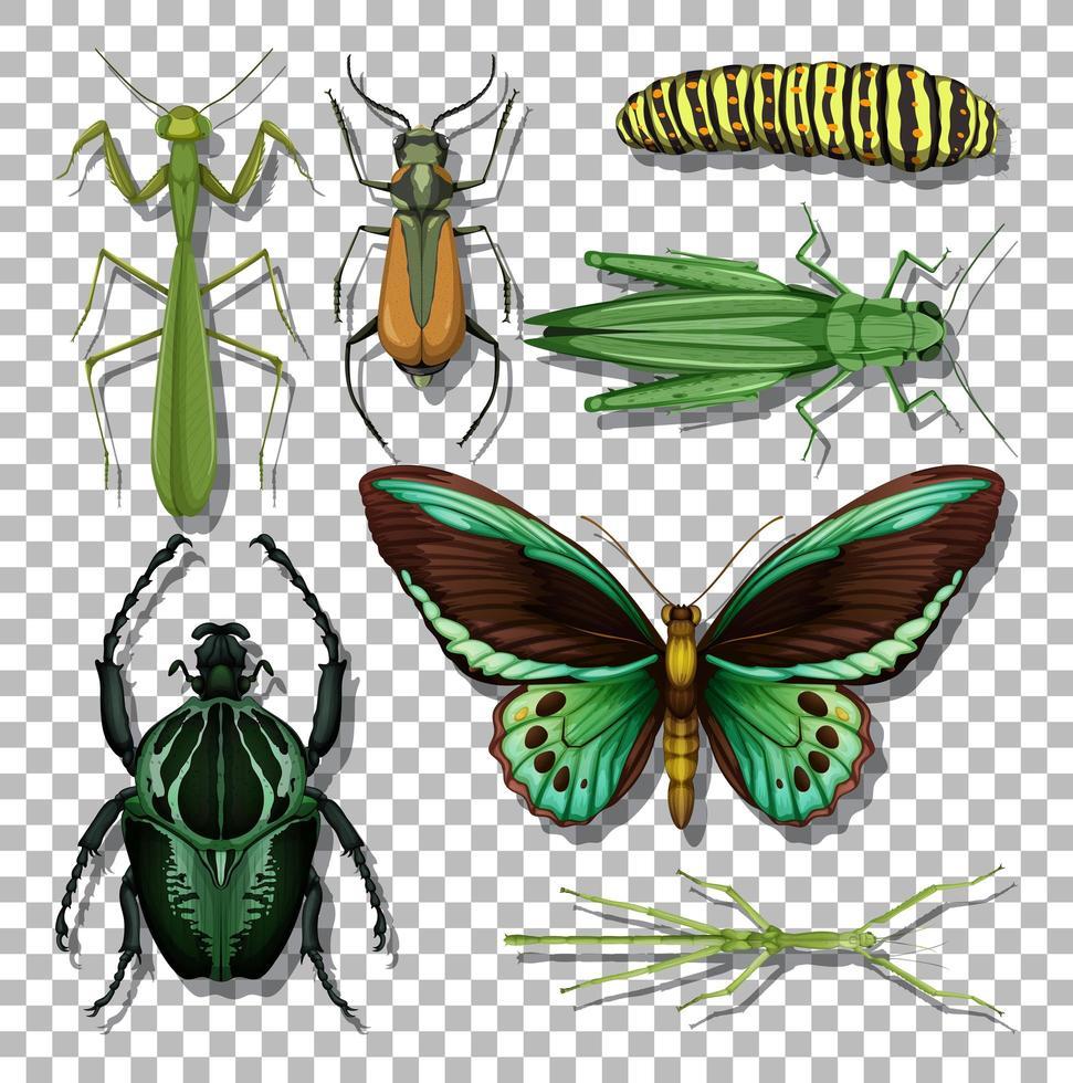 Satz von verschiedenen Insekten isoliert vektor