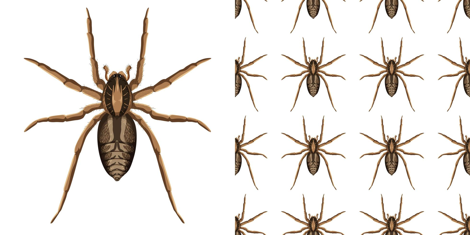 spindelinsekt isolerad på vit bakgrund och sömlös vektor