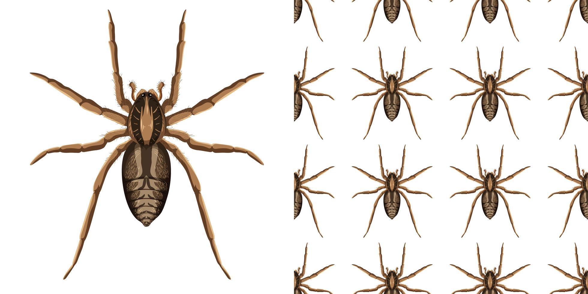 Spinneninsekt lokalisiert auf weißem Hintergrund und nahtlos vektor