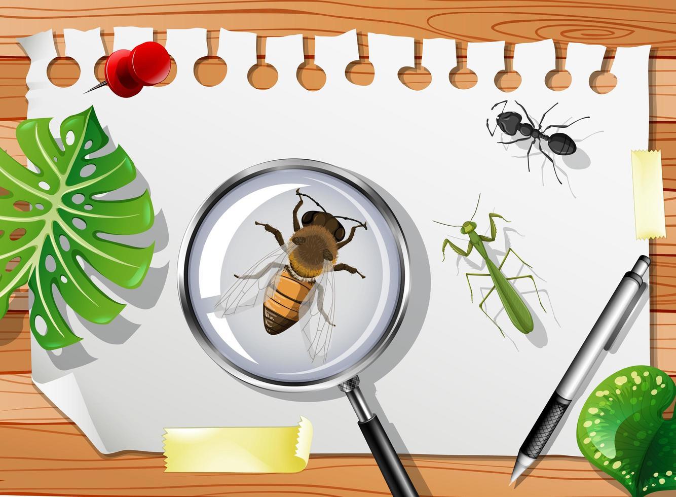 verschiedene Insekten auf dem Tisch hautnah vektor