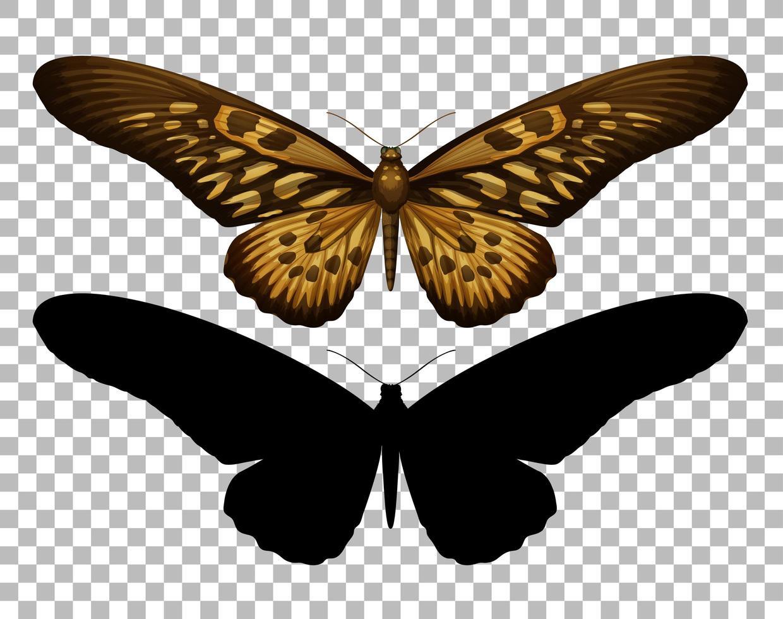 Schmetterling und seine Silhouette vektor
