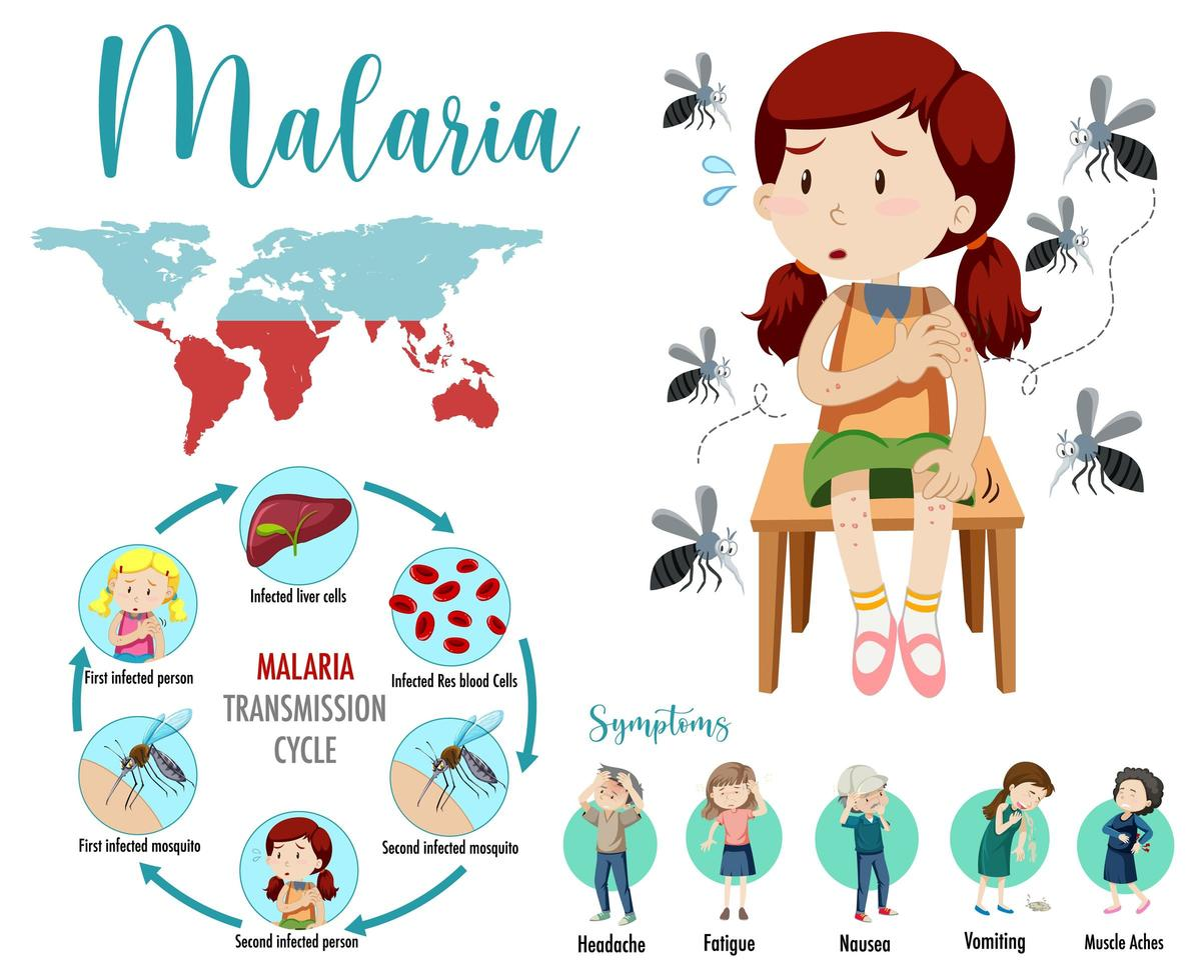 Malaria-Übertragungszyklus und Symptome Infografik vektor