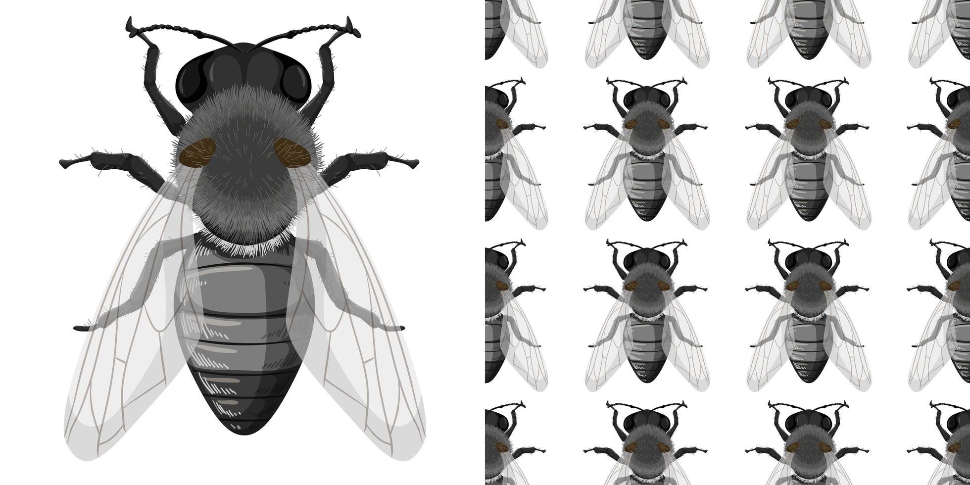 Fliegeninsekten isoliert auf weißem Hintergrund und nahtlos vektor