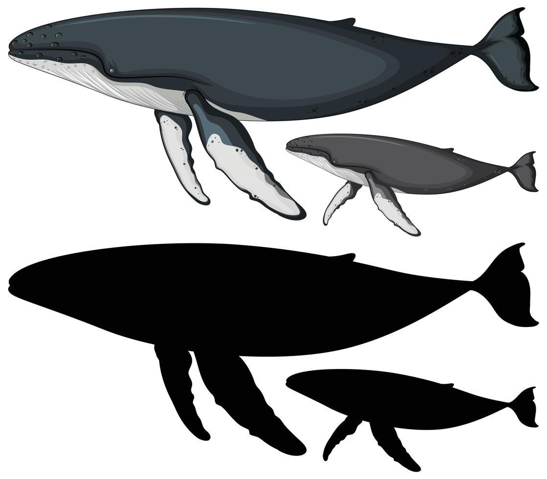Buckelwale und Silhouette vektor