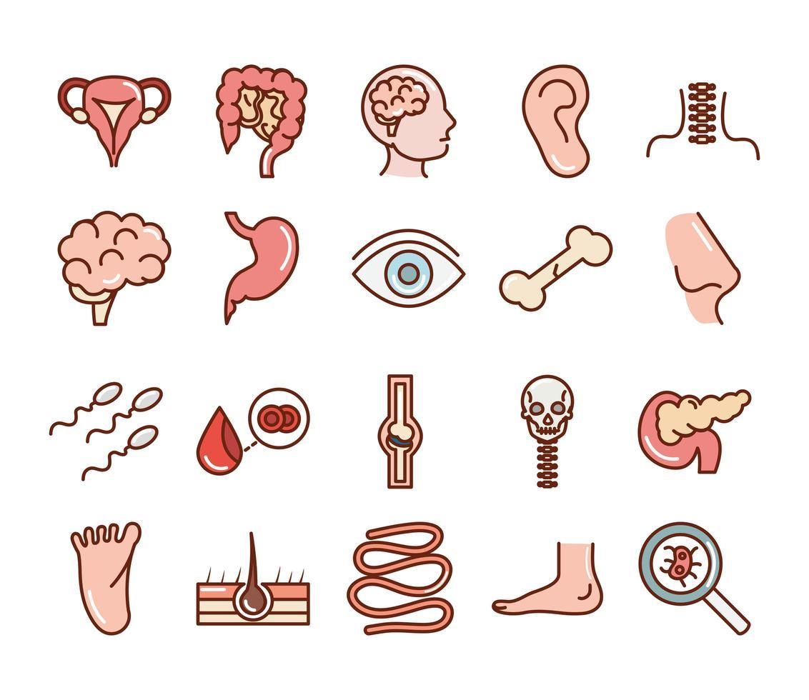 människokropps anatomi och hälsa ikonuppsättning vektor