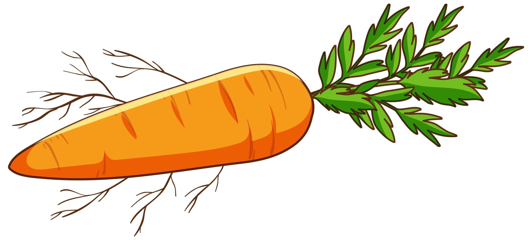 einfache Karotte auf weißem Hintergrund vektor