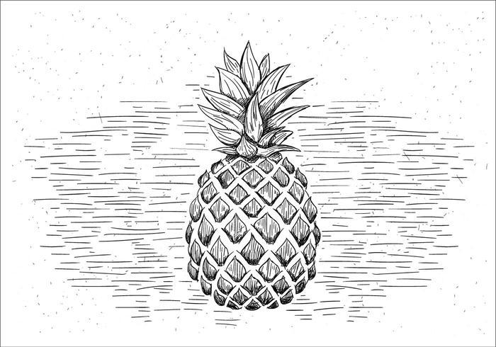 Fria händer som dras Vector ananas Illustration