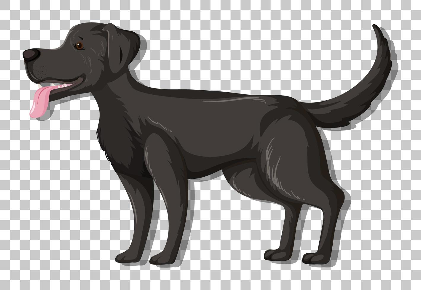 schwarzer Labrador Retriever in stehender Position Zeichentrickfigur isoliert auf transparentem Hintergrund vektor