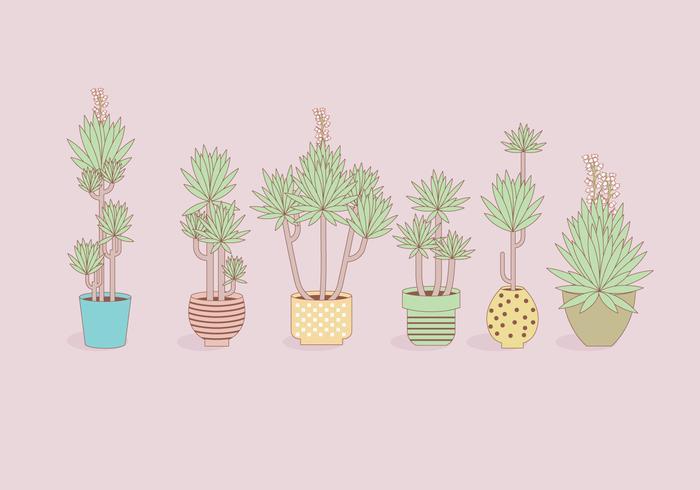 Juccapflanzen In Pot Vectors