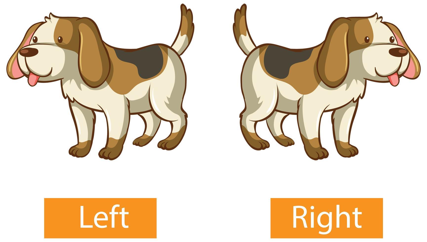 motsatta ord med vänster och höger vektor