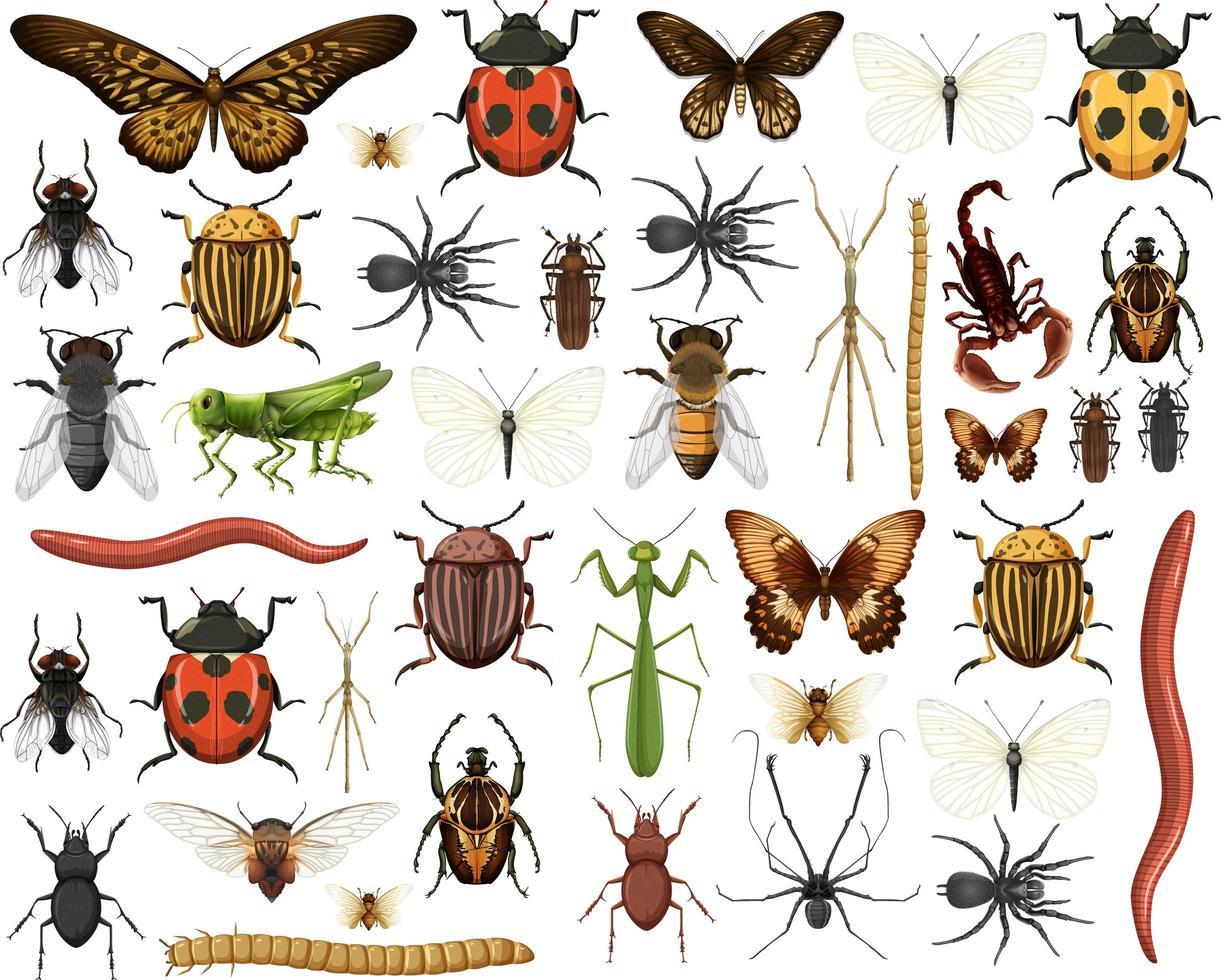 olika insekter samling isolerad på vit bakgrund vektor