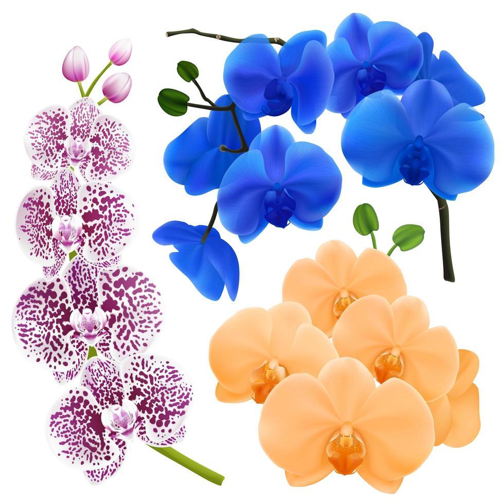 realistische Orchideenblumen bunte Sammlung vektor