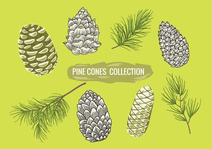 Pine Branch med Pine Cones Set Collection vektor