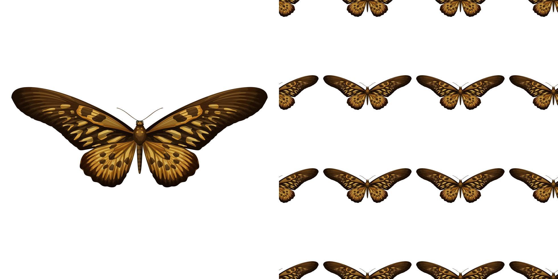 en fjäril isolerad på vit bakgrund och fjäril sömlös vektor