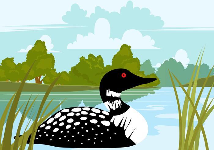 Loon fågel i sjön vektor